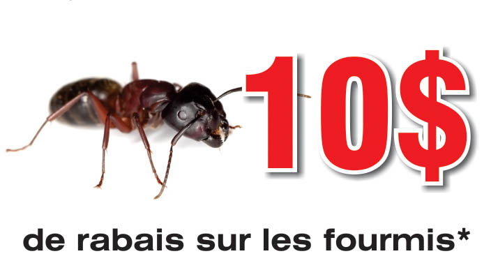Coupons Rabais Extermination Fourmis | Guet-Apens Extermination